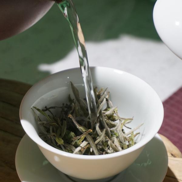 2019 Mudan White Tea